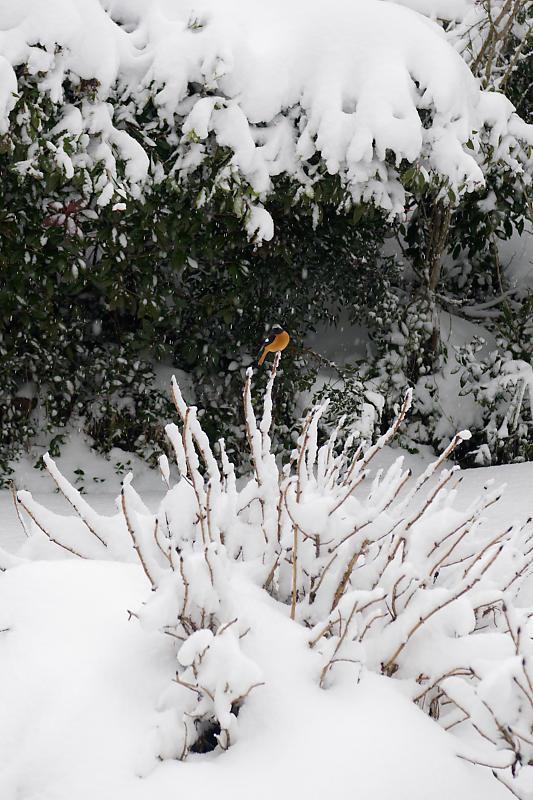 寒波到来!待望の雪景色@美山茅葺きの里 其の二_f0032011_16330864.jpg
