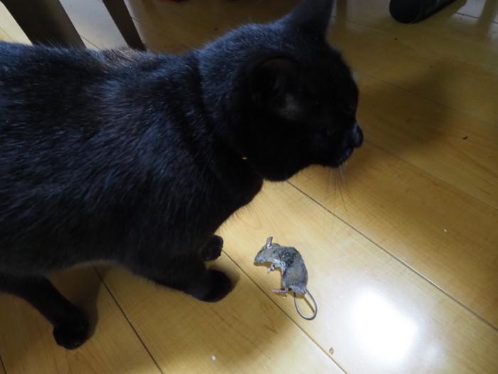 くうちゃんが、ネズミを捕って来た!_c0116915_23571182.jpg