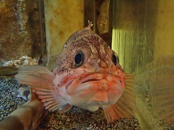 板橋区立熱帯環境植物館~東南アジアの深海【後編】_b0355317_22142611.jpg