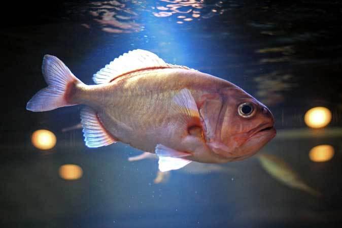 板橋区立熱帯環境植物館~東南アジアの深海【後編】_b0355317_22173936.jpg