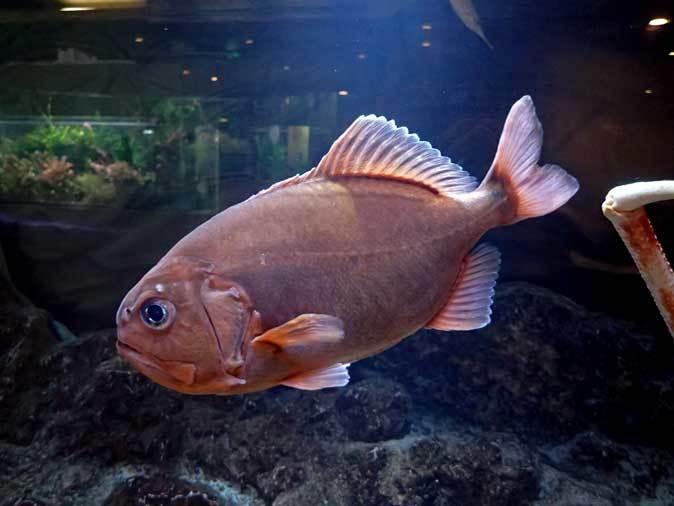 板橋区立熱帯環境植物館~東南アジアの深海【後編】_b0355317_22274209.jpg