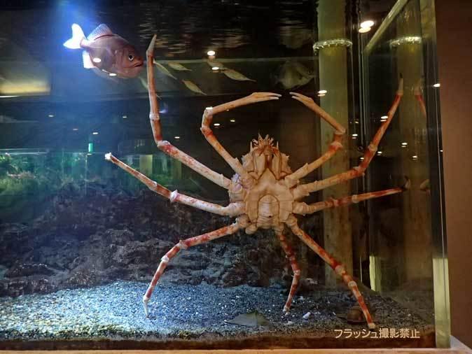 板橋区立熱帯環境植物館~東南アジアの深海【後編】_b0355317_22284659.jpg