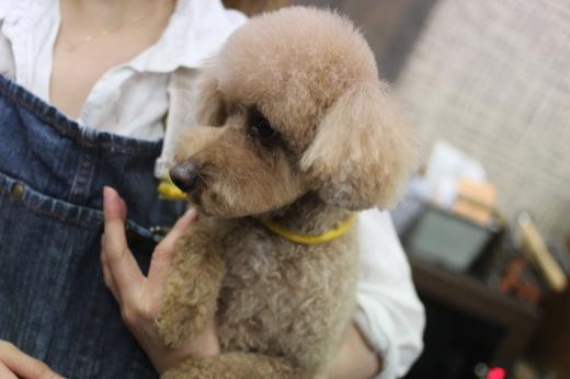 2月8日ご来店のワンちゃんです!!_b0130018_09044635.jpg