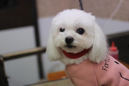 2月8日ご来店のワンちゃんです!!_b0130018_09170725.jpg