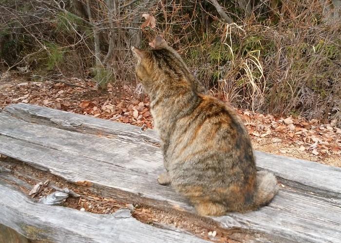 城山のお母さん猫戻る_c0038434_22235676.jpg