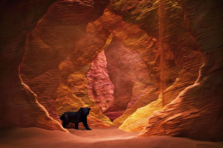 海の谷(Sea valley)の黒豹/ブラックパンサー(Black panther)_b0175635_00022847.jpg