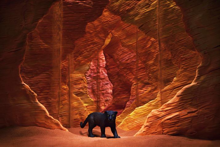 海の谷(Sea valley)の黒豹/ブラックパンサー(Black panther)_b0175635_00023231.jpg