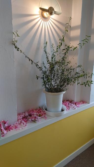 桜(´∀`)_c0350439_13460277.jpg