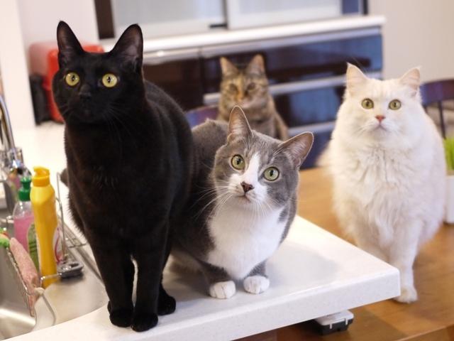 猫のお留守番 天ちゃん麦くん茶くん〇くんAoiちゃん編。_a0143140_22565858.jpg