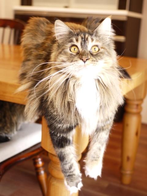 猫のお留守番 天ちゃん麦くん茶くん〇くんAoiちゃん編。_a0143140_22572294.jpg