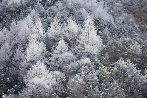 硫黄岳(2020年冬)_f0251840_17460186.jpg