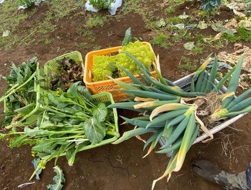 全ての野菜育ち 春気温の中 トンネルを持ち上げ換気しています_c0222448_11412477.jpg