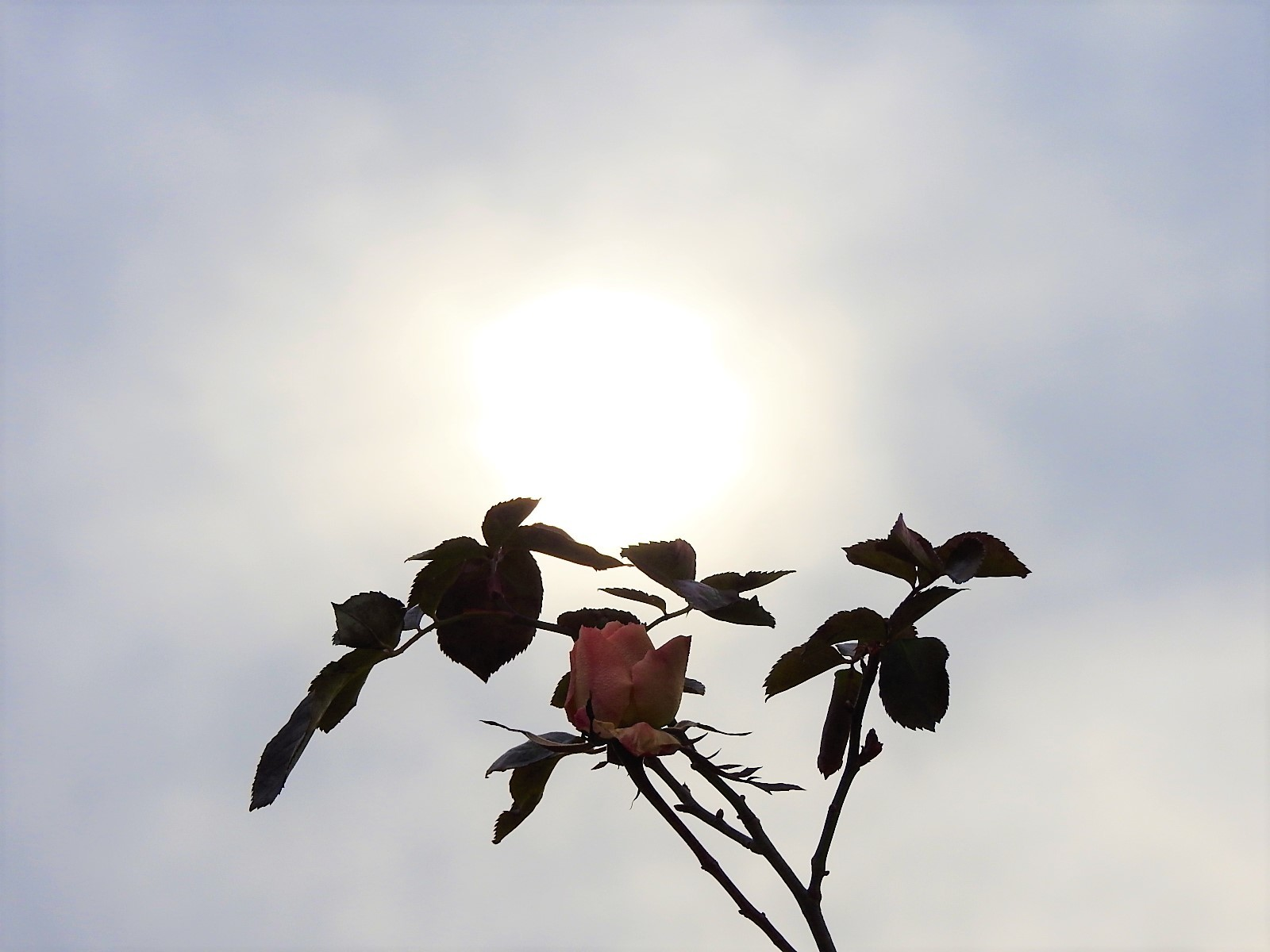 冬の暖かな日_e0406450_12241315.jpg