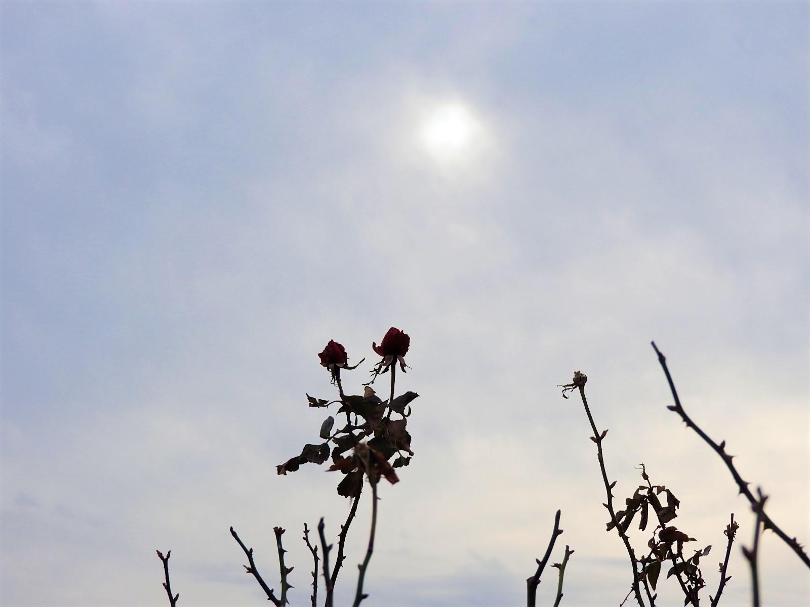 冬の暖かな日_e0406450_12244706.jpg