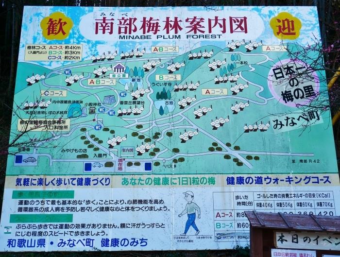 和歌山・みなべの梅林 1  2020-02-17 00:00_b0093754_22504367.jpg