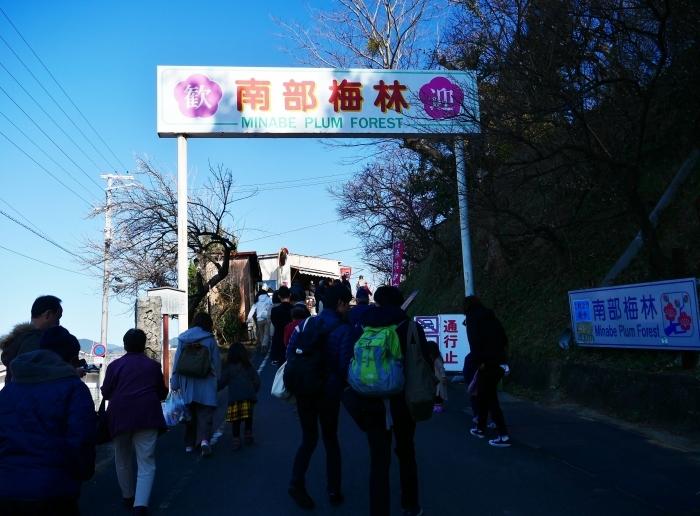 和歌山・みなべの梅林 1  2020-02-17 00:00_b0093754_22505526.jpg