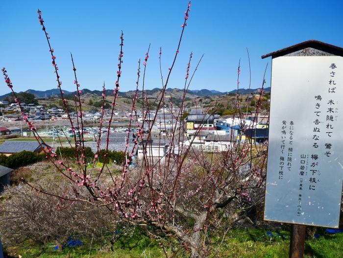 和歌山・みなべの梅林 1  2020-02-17 00:00_b0093754_22512171.jpg