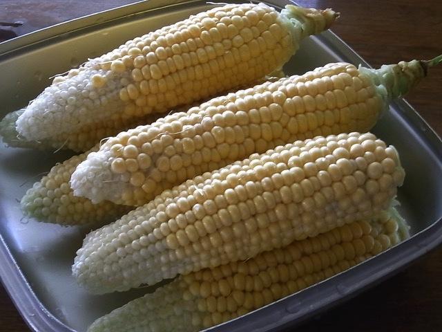 トウモロコシを食べる_e0158687_16510667.jpg