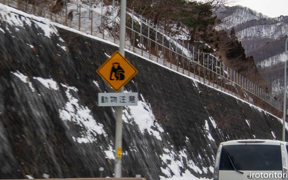 ドライブ 新潟 その1 (ハクチョウ他)  2020/02/10_d0146592_00064684.jpg