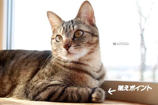 今日は暖かかったですね(*^▽^*)_c0140599_18022589.jpg