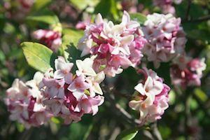 日々是好日〜春の予定など_e0115301_21444415.jpg