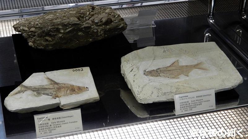 「恋する小惑星」舞台探訪004-1/3 第4話 つくば駅周辺、そして地質標本館へ_e0304702_08110540.jpg