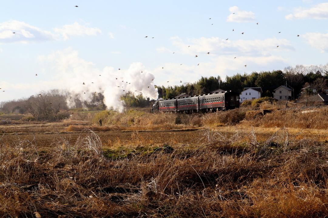 冬の午後の陽射しと冬鳥の中を走り去る汽車 - 2020年・真岡鉄道 -_b0190710_18370111.jpg
