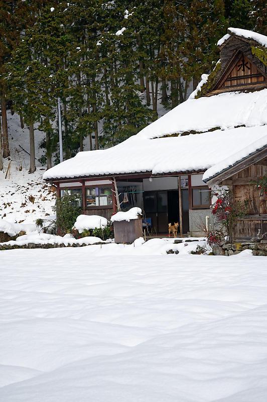 再びの雪景色!@久多_f0032011_16385508.jpg