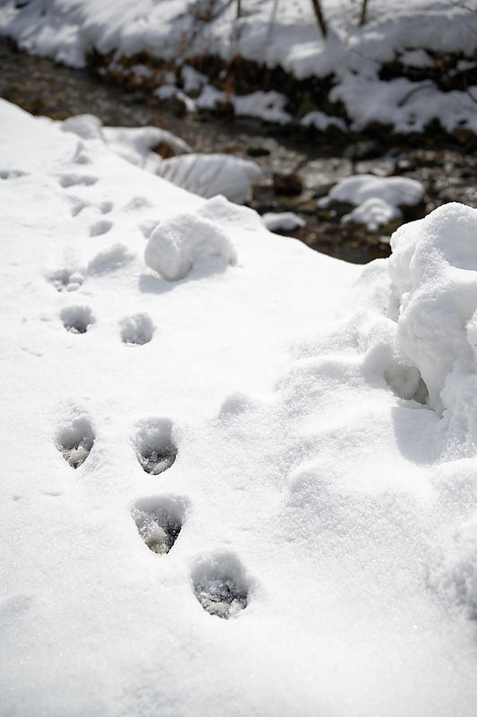 再びの雪景色!@久多_f0032011_16385691.jpg