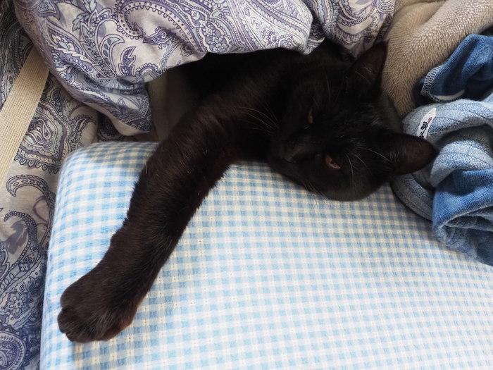 枕が好きな、くうちゃん_c0116915_23241480.jpg