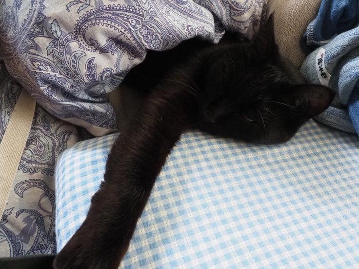 枕が好きな、くうちゃん_c0116915_23242437.jpg