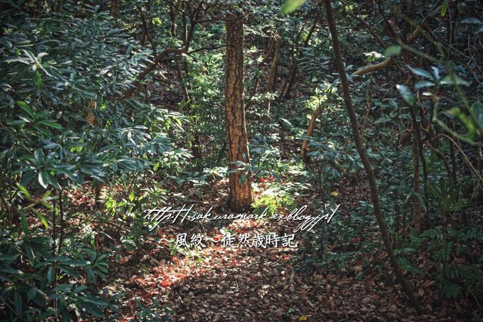 輝く森。_f0235723_19222812.jpg