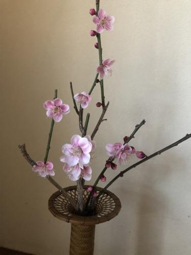 春の兆し_a0197730_09201546.jpeg