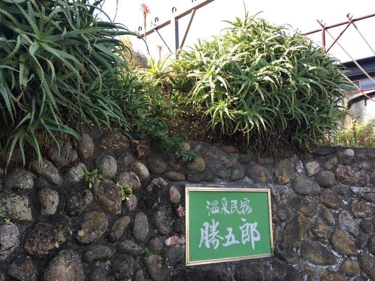 勝五郎のアロエ_d0386342_20281337.jpg