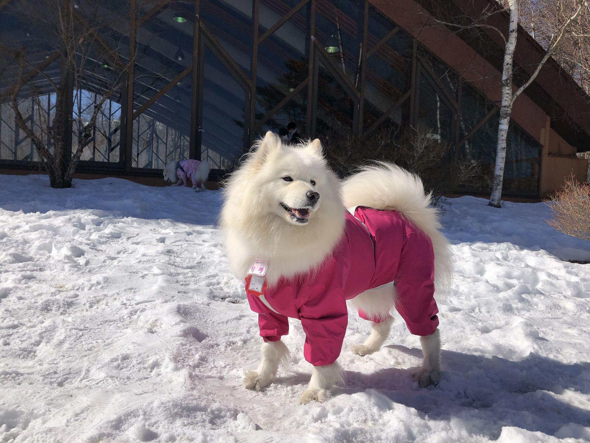 2020年2月雪遊びオフ その2_f0128542_01471067.jpg