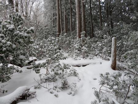 紺碧なお空の下で真っ白な雪山を楽しむ~【台高】2/11_d0387443_14125999.jpg