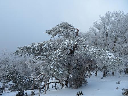 紺碧なお空の下で真っ白な雪山を楽しむ~【台高】2/11_d0387443_14130000.jpg