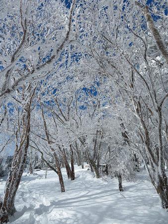 紺碧なお空の下で真っ白な雪山を楽しむ~【台高】2/11_d0387443_14131497.jpg