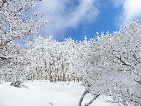 紺碧なお空の下で真っ白な雪山を楽しむ~【台高】2/11_d0387443_14133321.jpg