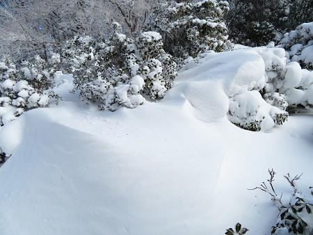 紺碧なお空の下で真っ白な雪山を楽しむ~【台高】2/11_d0387443_14133377.jpg