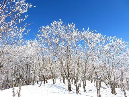 紺碧なお空の下で真っ白な雪山を楽しむ~【台高】2/11_d0387443_14133814.jpg