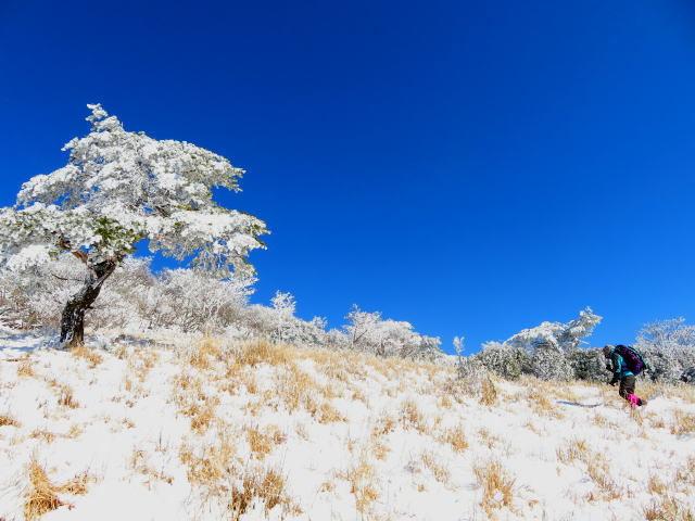 紺碧なお空の下で真っ白な雪山を楽しむ~【台高】2/11_d0387443_16543157.jpg