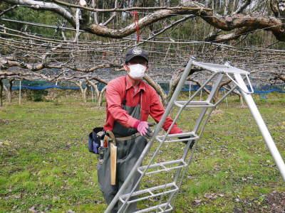 熊本梨 本藤果樹園 今年は花が来るのが早いかも?匠の剪定と誘引作業が急ピッチで行われています!2020_a0254656_17225010.jpg