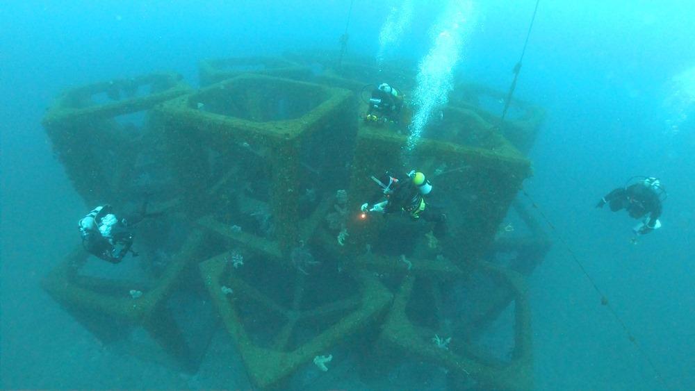 0216  2月14日 第35回 人工魚礁研究会 波左間_b0075059_10040029.jpg