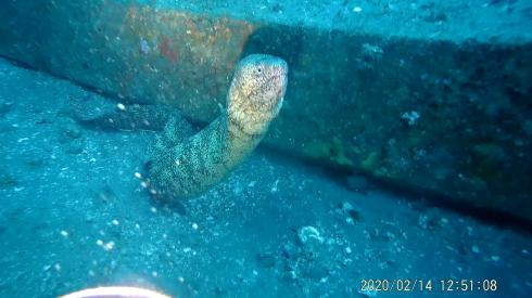 0216  2月14日 第35回 人工魚礁研究会 波左間_b0075059_10061554.png