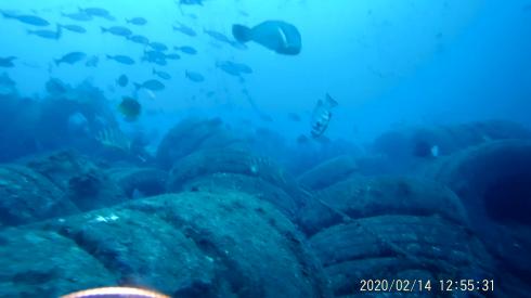 0216  2月14日 第35回 人工魚礁研究会 波左間_b0075059_10112494.png