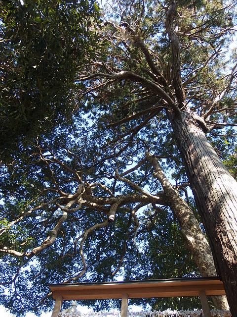 ついに猿田神社へ。森の力と、独特で不思議な世界・・・ (2/11)_b0006870_7392282.jpg