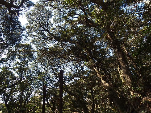 ついに猿田神社へ。森の力と、独特で不思議な世界・・・ (2/11)_b0006870_740254.jpg