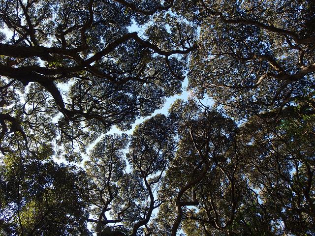ついに猿田神社へ。森の力と、独特で不思議な世界・・・ (2/11)_b0006870_7405071.jpg