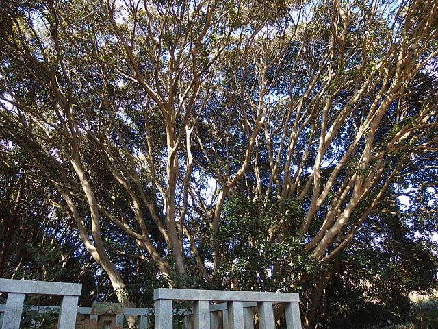 ついに猿田神社へ。森の力と、独特で不思議な世界・・・ (2/11)_b0006870_7415194.jpg